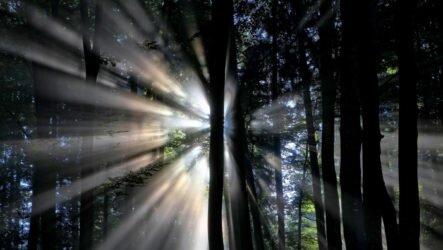 Сахасрара чакра — высший энергетический центр. Характеристика