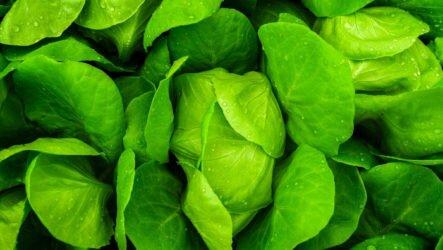 Польза зелени для организма. 12 полезных свойств зелени